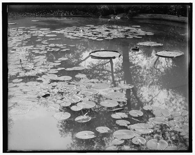 [Lily pond, Washington Park, Chicago, Ill.]