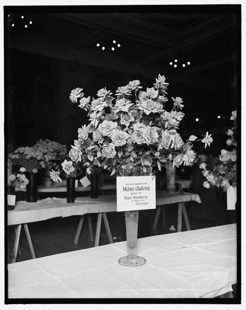 [Madame Chatenay roses, American Carnation Society Exhibition, Detroit, Mich.]