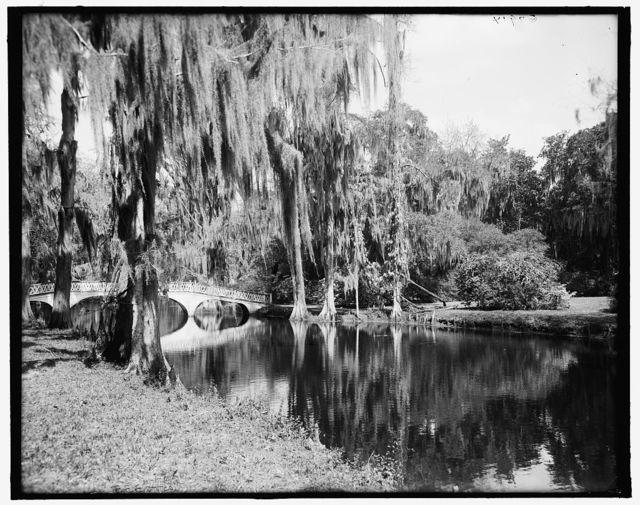 [Magnolia-on-the-Ashley (i.e. Magnolia Gardens), nature's mirror, Charleston, S.C.]