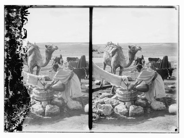 [Man giving water to a camel]