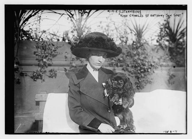 "Miss F.S. Sternberg ""King Charles St. Anthony Sun Spot"" (dog)"