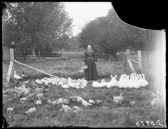 Mrs. Link Milburn shown with her chickens and ducks on her  farm at Overton, Dawson County, Nebraska