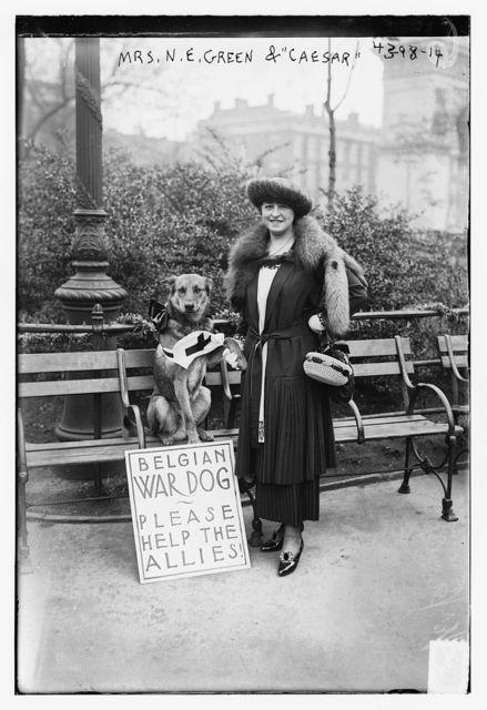 "Mrs. N.E. Green & ""Caesar"" [Belgian war dog]"