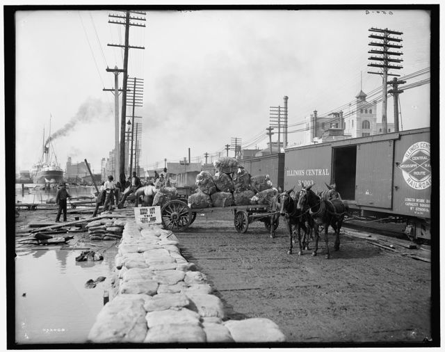 [Mule teams and the levee, New Orleans, Louisiana]