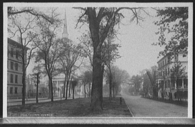 Oglethorpe Avenue, [Savannah, Ga.]