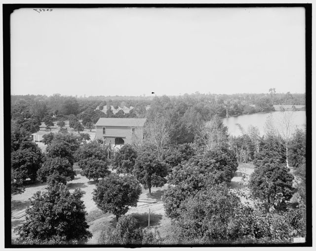 [Orange groves on Lake Concord, Orlando, Florida]