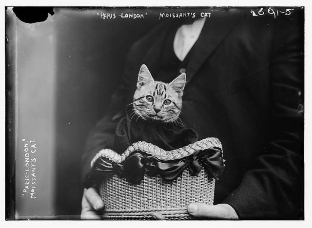 Paris-London Moissant's cat
