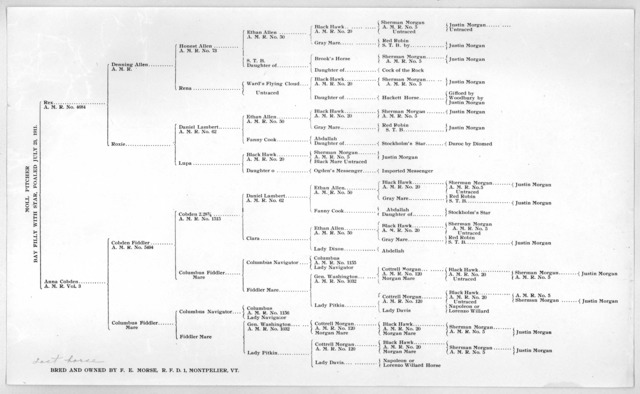 [Pedigree chart] of Moll Pitcher, Bay Filly with star, foaled July 23, 1911. Bred and owned by F. E. Morse, R. F. D. 1 Montpelier Vt.