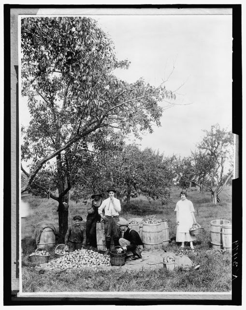 [People picking fruit in an orchard]