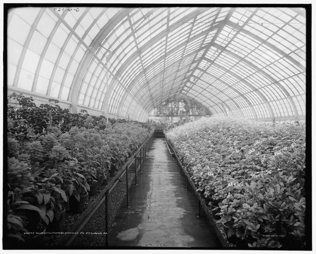 Phipps Conservatory, Schenley Pk. [Park], Pittsburg, Pa.