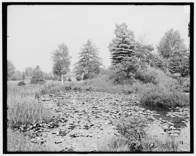 [Pond lilies, Forest Park, Springfield, Mass.]