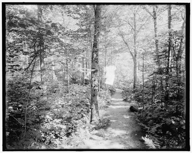 [Profile House, wildwood path, White Mts., N.H.]