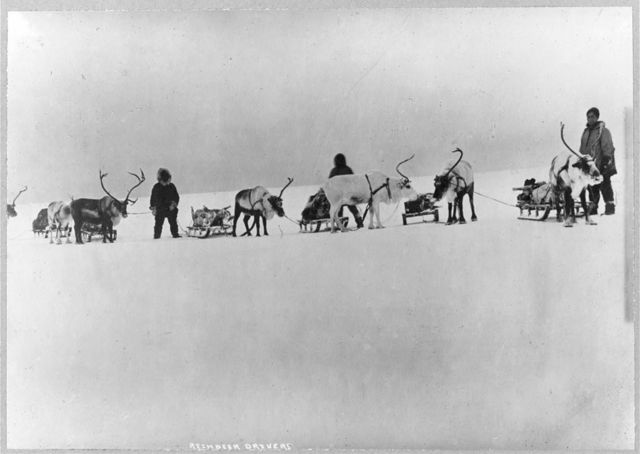Reindeer, sleds and drivers