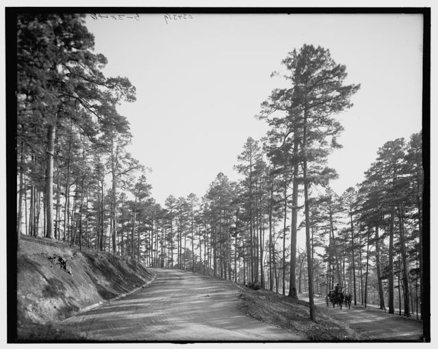 [Roadway through the pines, Hot Springs, Ark.]