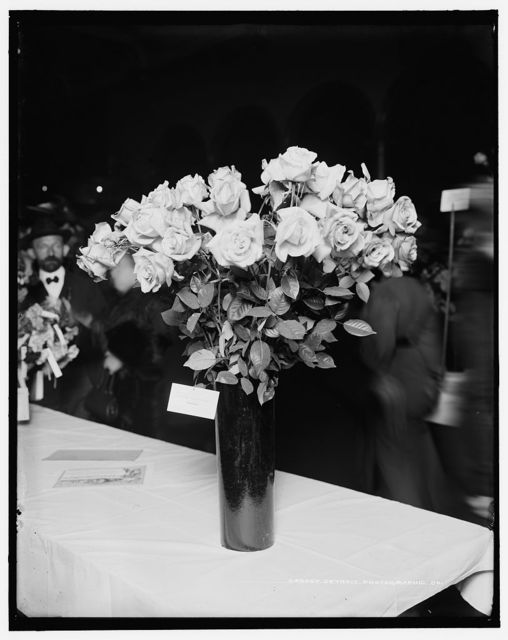 [Roses, grown by Frank Holznagle, American Carnation Society Exhibition, Detroit, Mich.]
