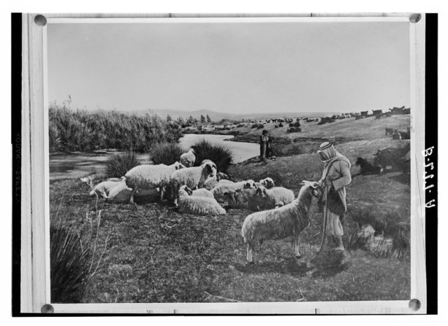 """Set of thirteen select slides of shepherd life illustrating the Twenty-Third Psalm. """"He maketh me to lie down in green pastures"""""""