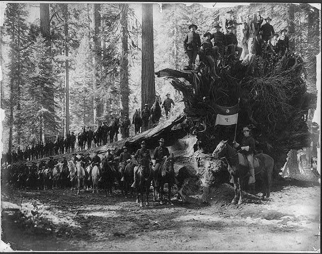 The fallen monarch, surrounded by Co. F, 6th Cavalry U.S.A., Mariposa big tree grove, Yosemite Valley National Park, Calif.