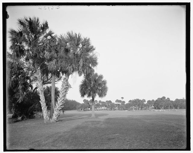 [The Golf links, Palm Beach, Fla.]