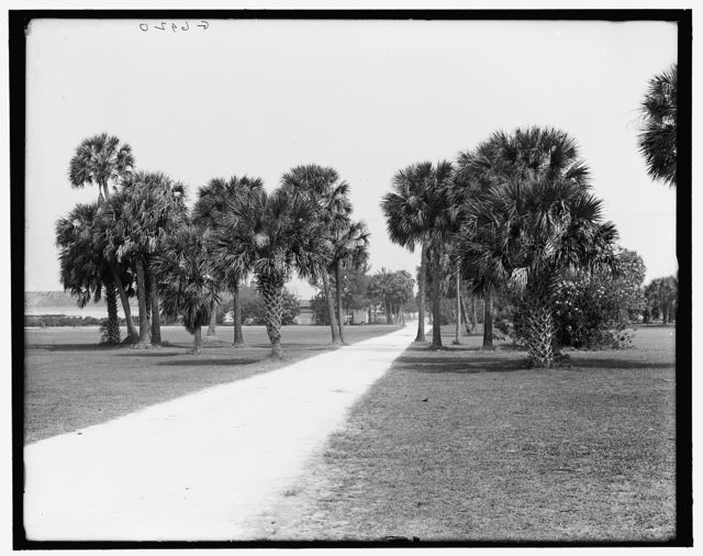 [The Road through the golf links, Palm Beach, Fla.]