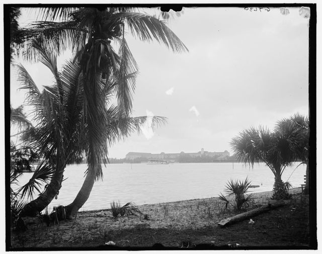 [The Royal Poinciana from Lake Worth, West Palm Beach, Fla.]