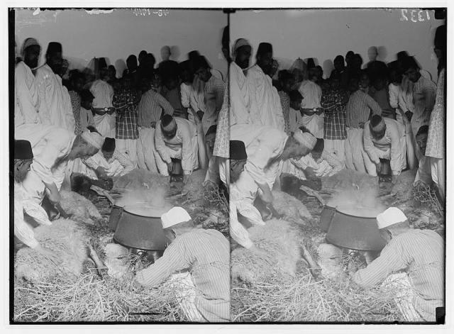 The Samaritan Passover on Mt. Gerizim. The sacrifice.