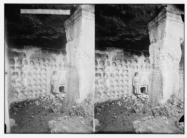 Tibna, north west of Jerusalem, etc. Columbarium at Tibna.