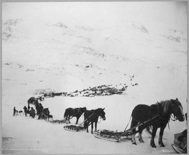 Transportation by horses, mules, dogs and bicycle