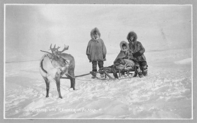 Traveling with reindeer