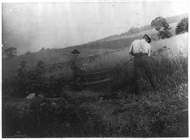 [Two men cutting grain, using scythes with cradles]