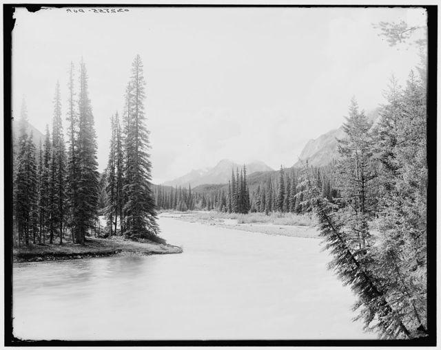 [Up Spray River from bridge, Canadian National Park, Alberta, Canada]