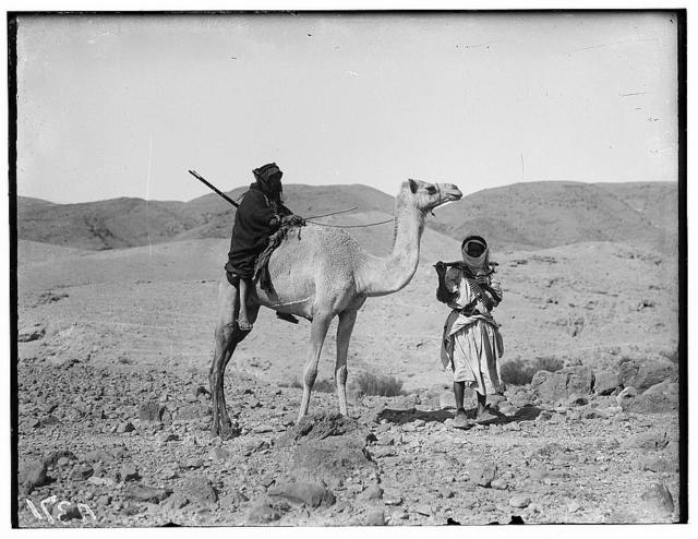 Various types, etc. Riding on camel