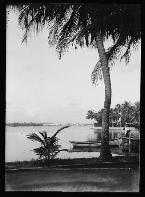 [Waterfront with palm, probably Fla.]