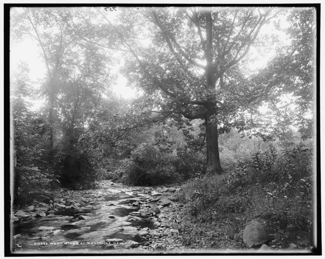 West River at Westville, New Haven