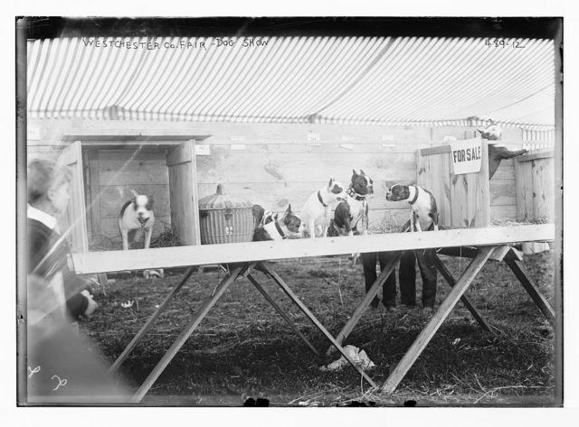 Westchester Co. Fair, dog show [New York]