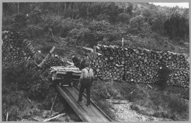 Wood chopper's station with fuel for steamers on the Upper Yukon