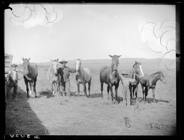Young man and two boys with six horses on farm in southwest Custer County, Nebraska