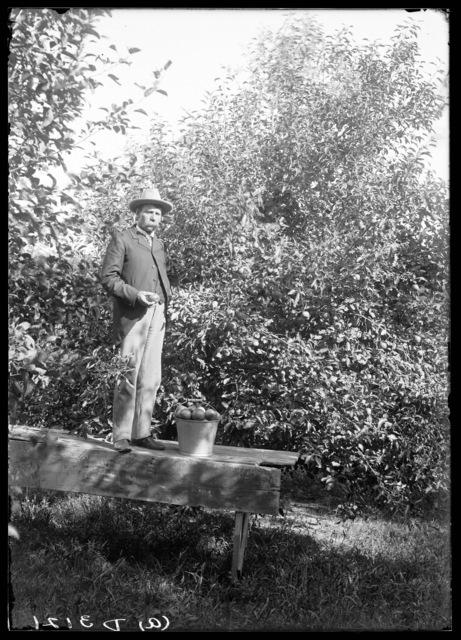 Apple orchard six miles west of Ansley, Nebraska