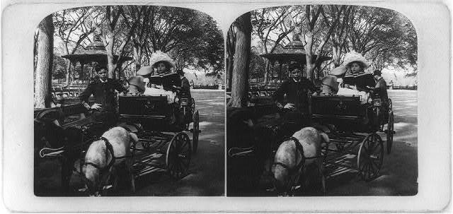 Goat wagons, Central Park, New York