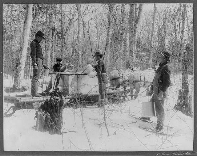 Men pouring [maple] sap into gathering tanks, Horse Shoe Forestry Co., Horse Shoe, St. Laurance Co., N.Y.
