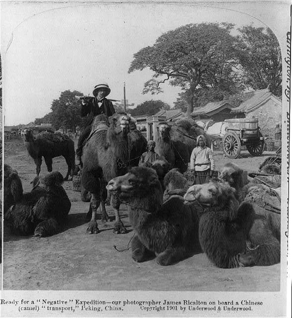 "Ready for a ""negative"" expedition - our photographer James Ricalton on board a Chinese (camel) ""transport,"" Peking, China"