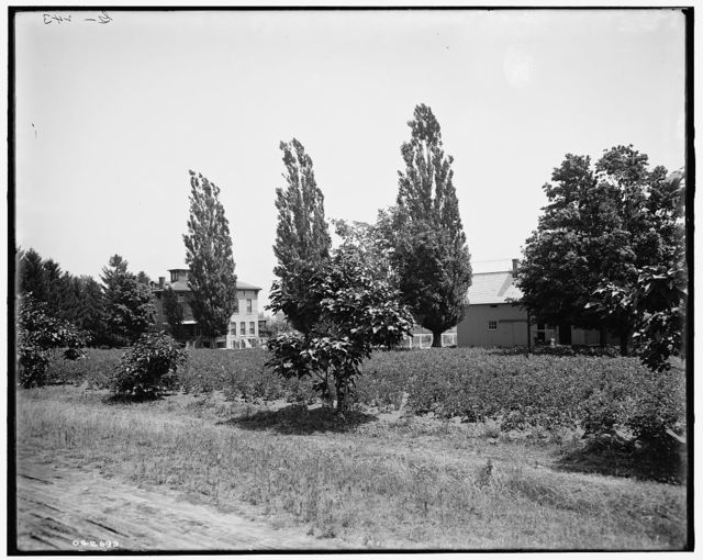 [The Firs from orchard, New Baltimore, Mich.]