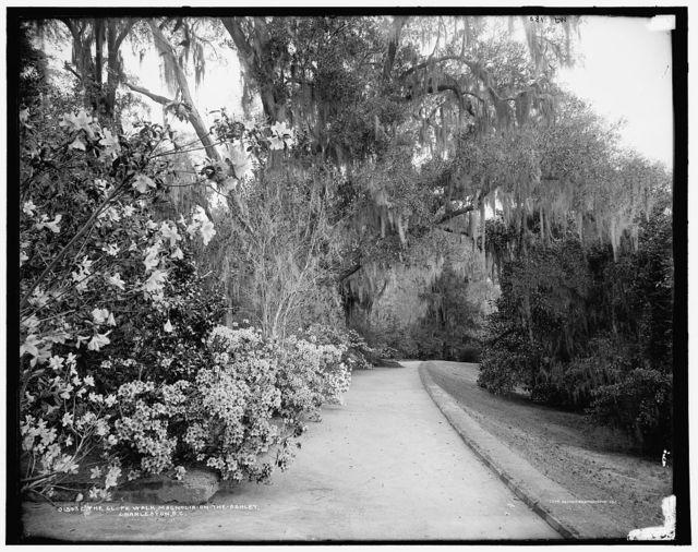 The slope walk, Magnolia-on-the-Ashley [i.e. Magnolia Gardens], Charleston, S.C.