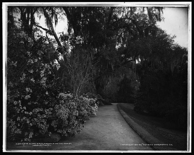 The Slope walk, Magnolia-on-the-Ashley, [Magnolia Gardens], Charleston, S.C.