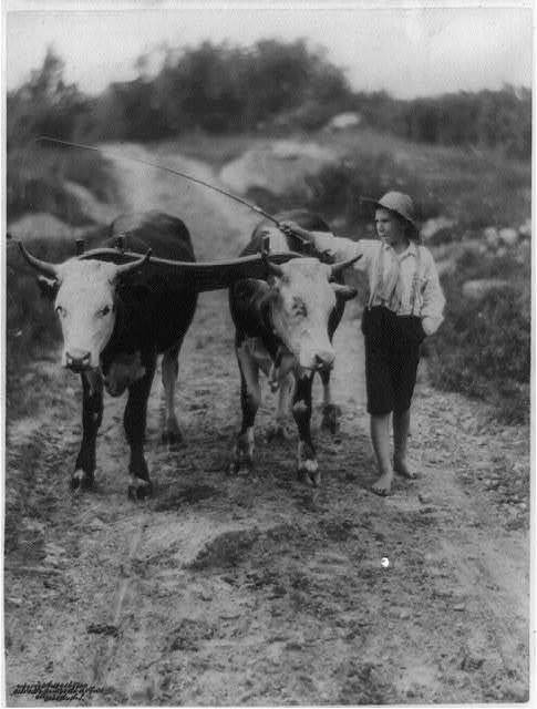 [Boy with whip and pair of cattle on yoke]