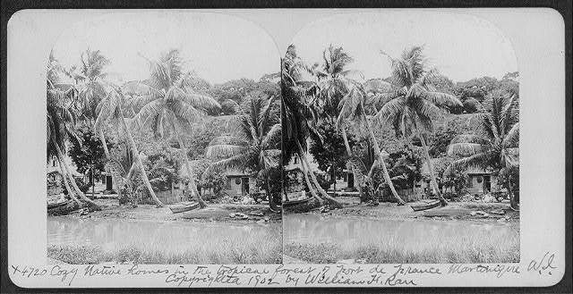 Cozy native homes in the tropical forest of Fort de France, Martinique, W.I.
