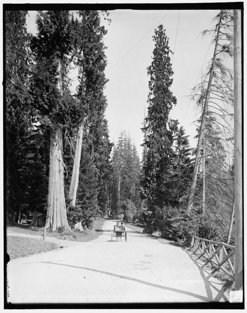 Driveway in Stanley Park, Vancouver, B.C.