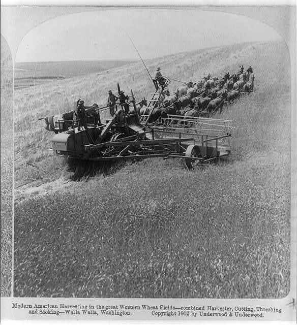 Modern American harvesting the great western wheat fields - combined harvester, cutting, threshing and sacking, Walla Walla, Washington