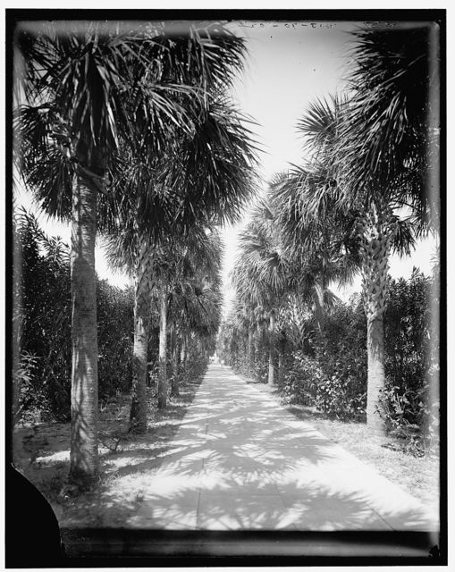 [Ocean walk, Palm Beach, Fla.]