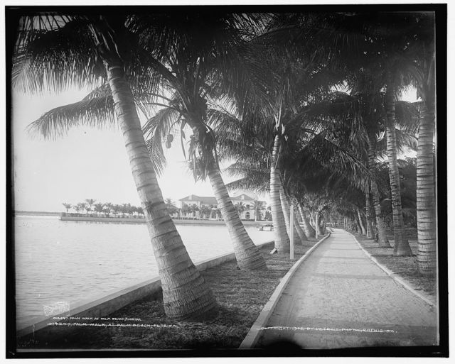 Palm walk at Palm Beach, Florida