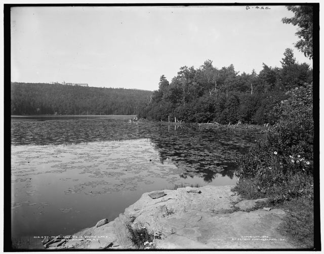 Pond lillies [i.e. lilies] in South Lake, Catskill Mountains, N.Y.